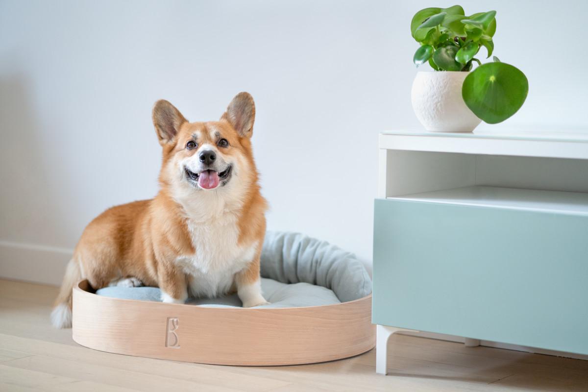 panier chien design